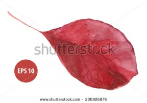 painting autumn foliage, watercolor leaf
