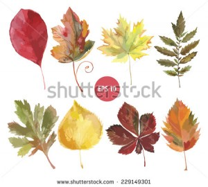 set of vector watercolor foliage, autumn leaf