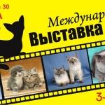 Баннер 3х6 Международная выставка кошек в Ростове-на-Дону